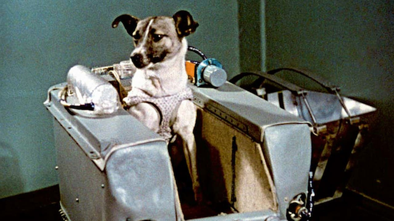 Laika, the first dog to enter space