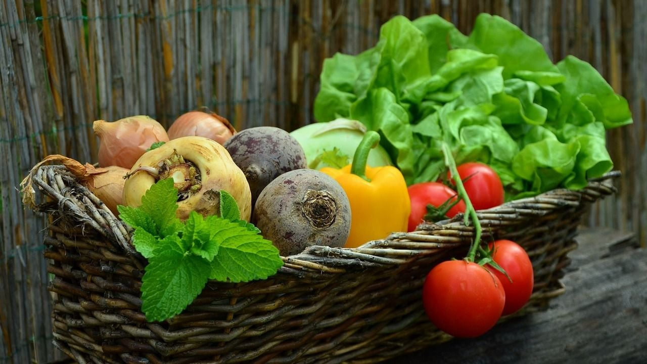 Plant-based diet found to reduce risk of fatal heart diseases, stroke: Study- Technology News, Firstpost