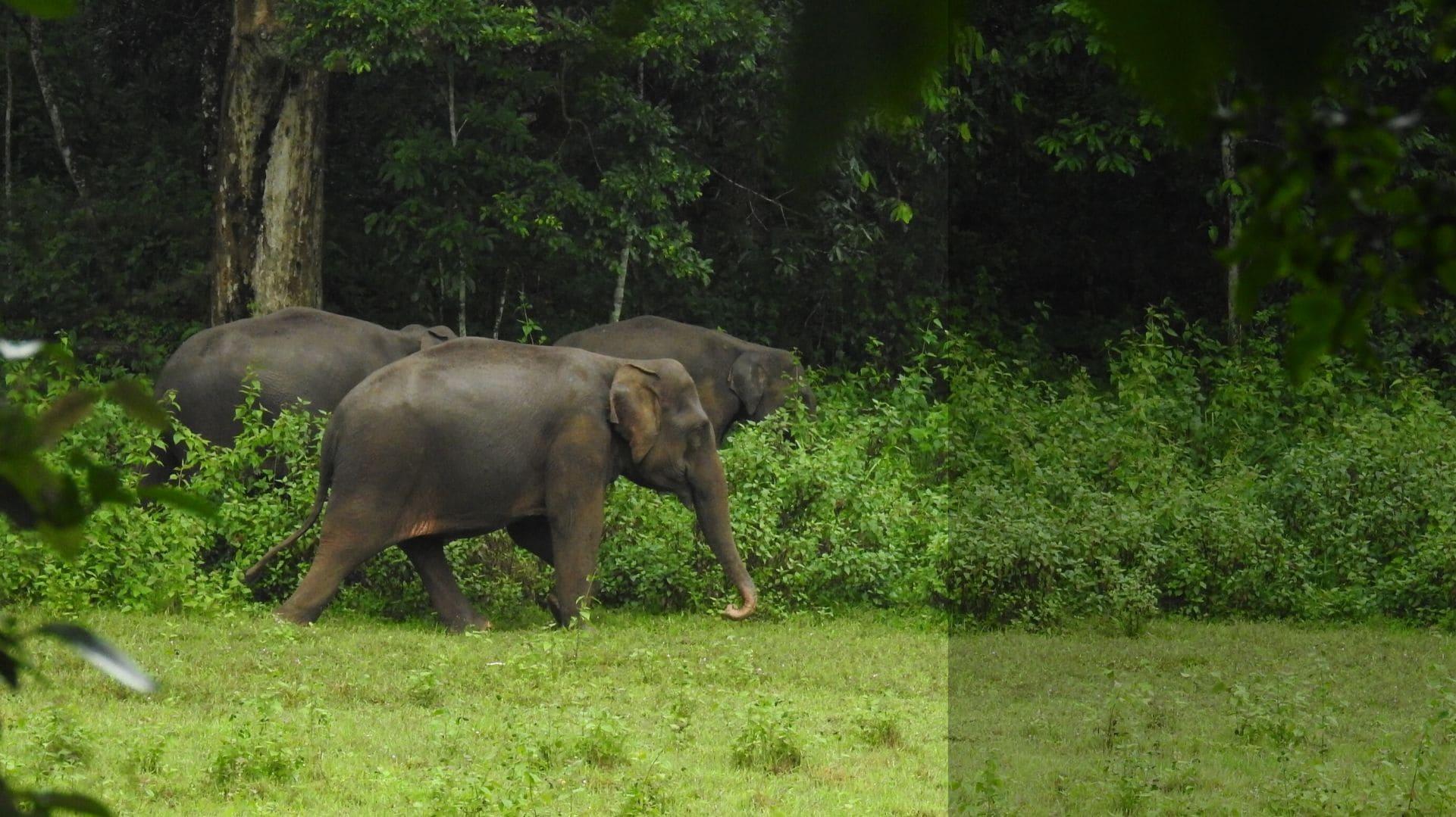 Can a new elephant reserve address human-elephant interaction in Chhattisgarh?
