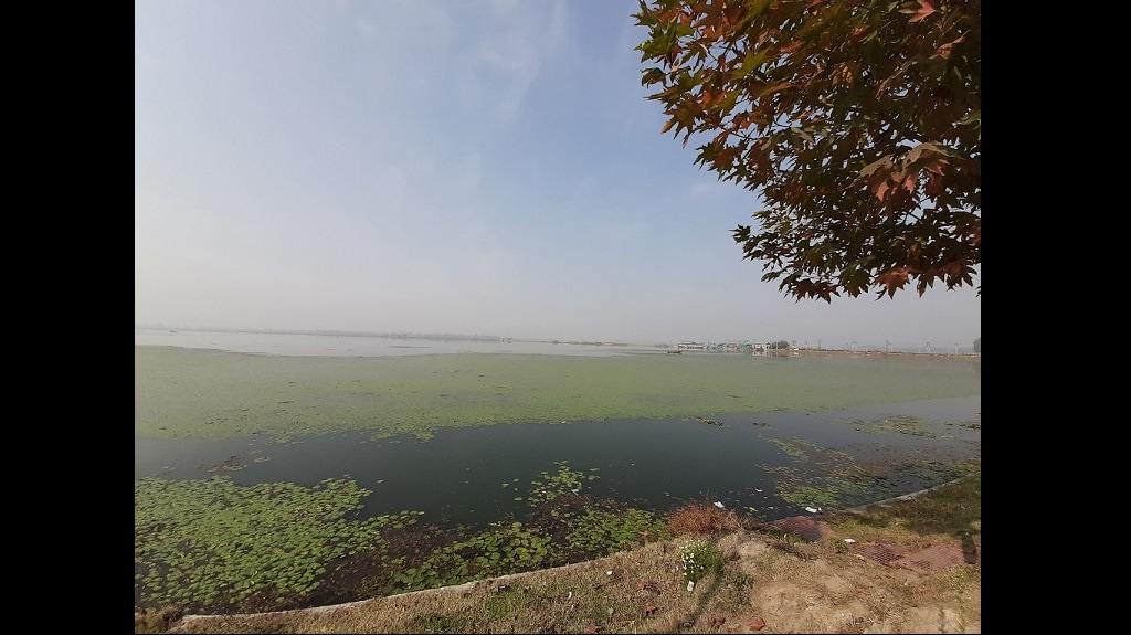 A thick spread of algae lies over the Dal Lake. Photo credit: Faisal Bhat/ The Third Pole