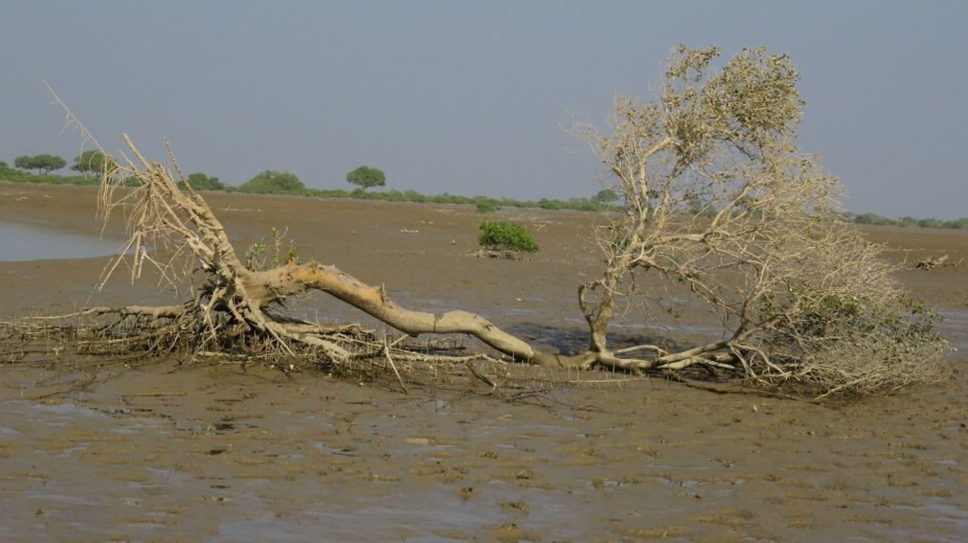 Indus1921_3