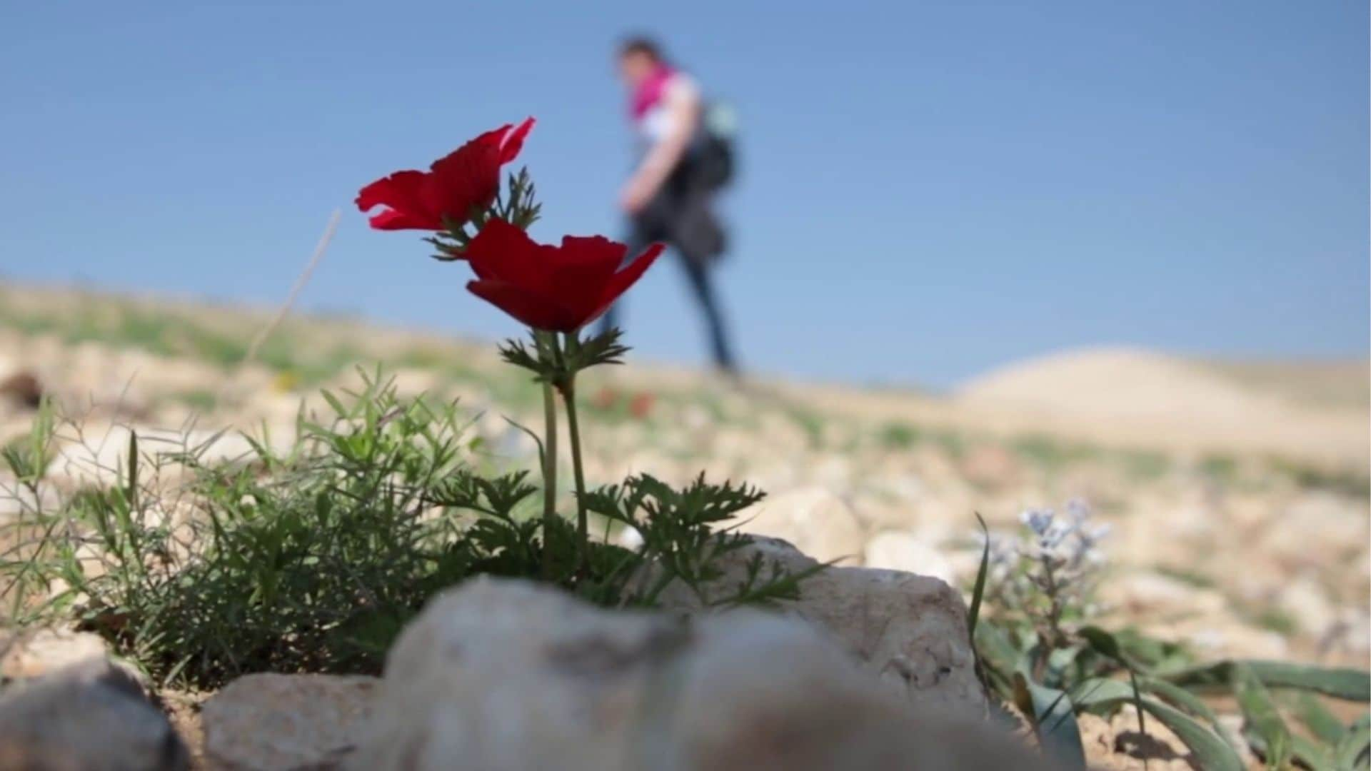 A Million Steps for Love: Exhibition captures moments from a documentary on pilgrimage of 'love' to Jerusalem