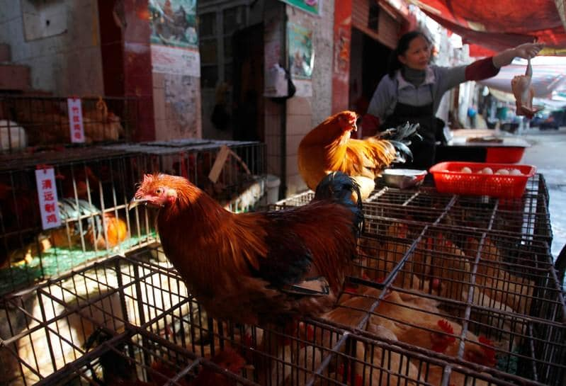 China's poultry giant goes to lab in quest for meatier chickens