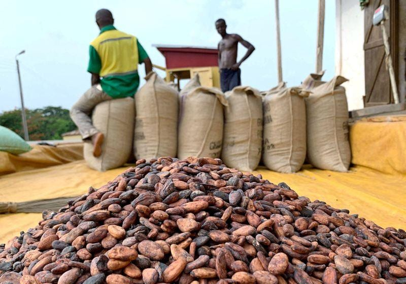 Child labour rising in West Africa cocoa farms despite efforts  report