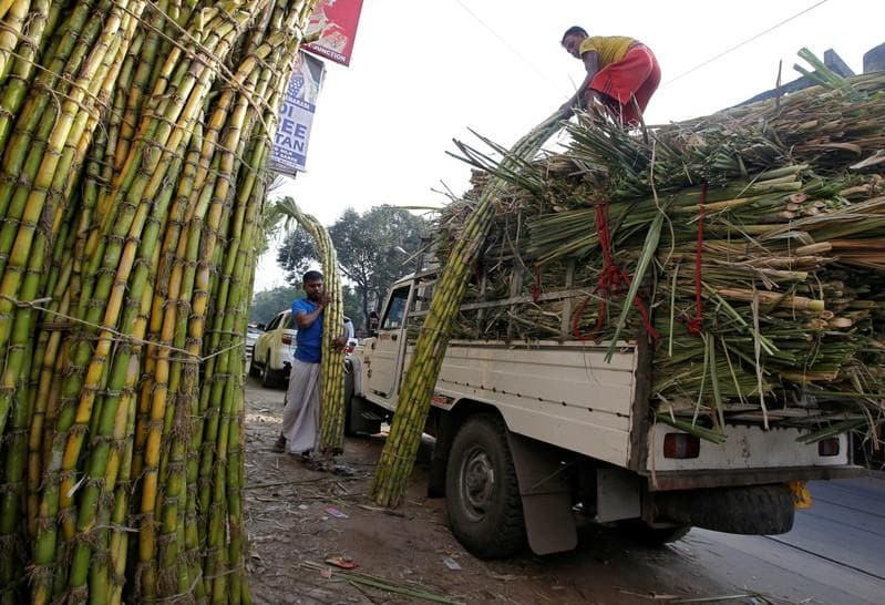 ISO sees smaller global sugar surplus as output falls