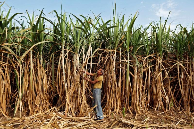 India needs sugar reforms as stocks climb ISMA chief